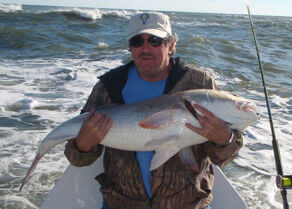 Huge Drumrunner redfish.