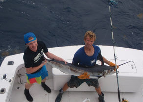 Another marlin being held up before being released by the Gecko crew.